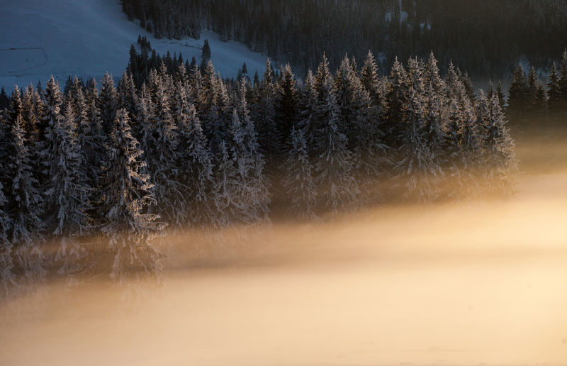 Winter landscapes with Rodnei Mountains, Romania. Alpine Ice Light Morning Nature Trees Weather Winter Beauty Beauty In Nature Cold Fog Foggy Forest Landscape Mist Mountain Pine Tree Season  Snow Sunrise Tranquility White