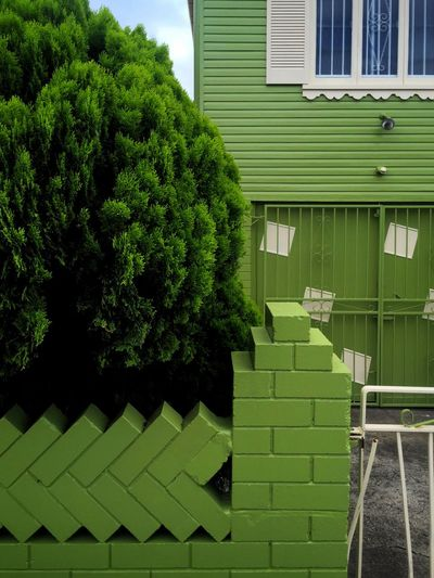 Green Urban Geometry Streetphoto_colour Urban Landscape Tree Fence The Architect - 2016 EyeEm Awards Colour Of Life