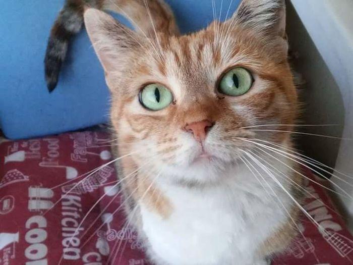 Domestic Cat Domestic Animals My Rosy