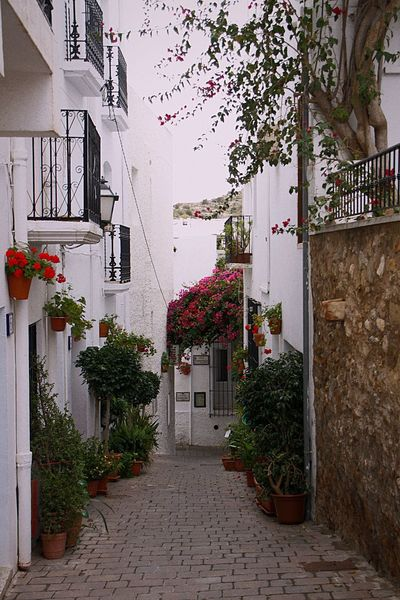 White Street Architecture No People Plant Travel Destinations Geranium Gitanilla Flower Almería Patio SPAIN