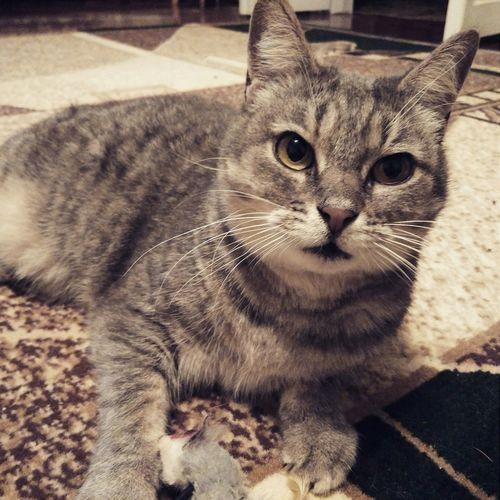 Cat Relaxing Cute Pets Pet Mycat♥ Lovely Like Like4like Ukraine My Lovely Cat