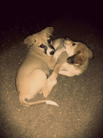 Cute Pets Puppies😍 Captured Moment