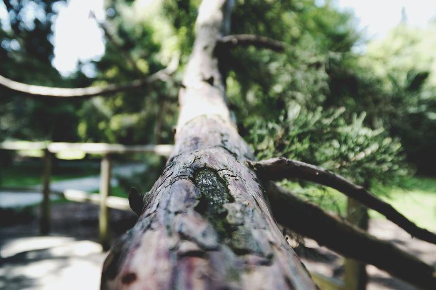 Man sägt nicht den Ast, auf dem man sitzt! Macro Photography Macro Beauty Nature Photography Mammutbaum Insel Mainau Bodensee My Point Of View Tree Close-up Tree Trunk Tranquility
