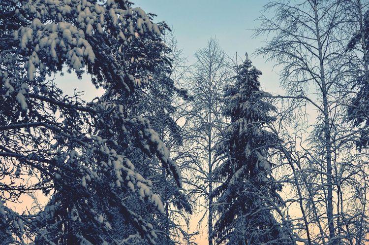 Snow ❄ It's Cold Outside Magic Winter