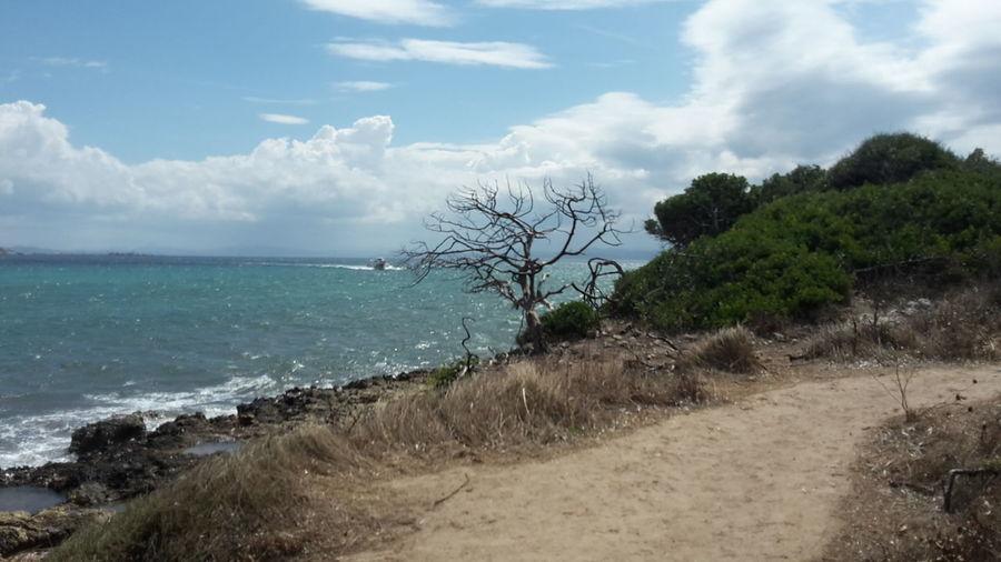 Sea Piantarella Tree By The Sea