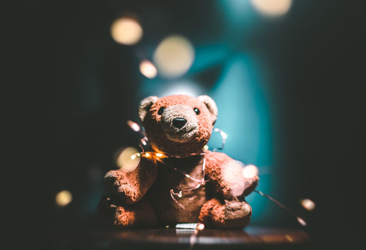 Close-up of teddy bear at night