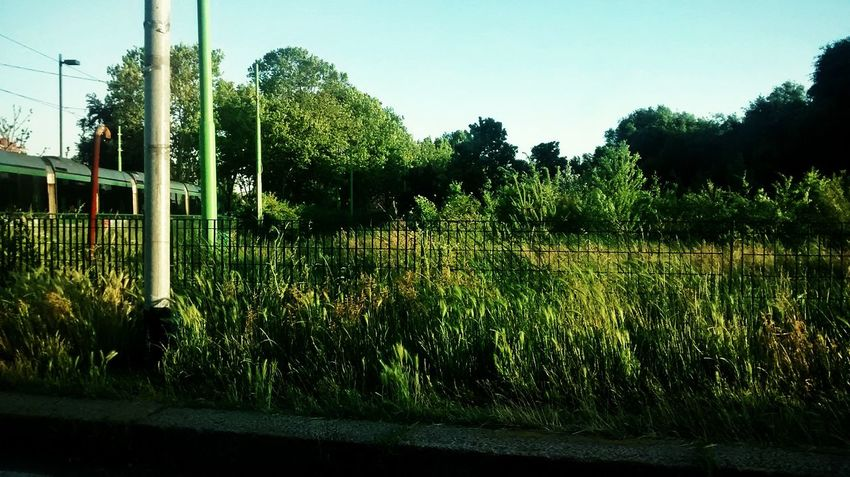 Grass Urban Nature Park Parconord