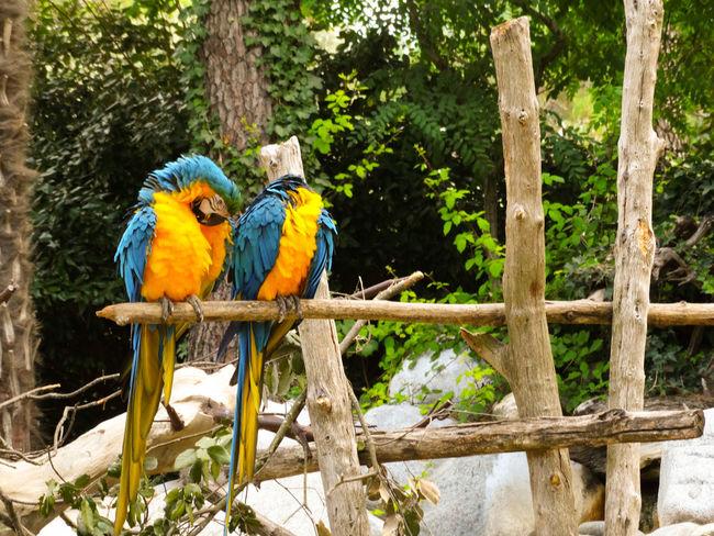 Parrots Parrots Colors Explosion Of Color Tropical Bird Rainforest Tropical Rainforest Wildlife Reserve