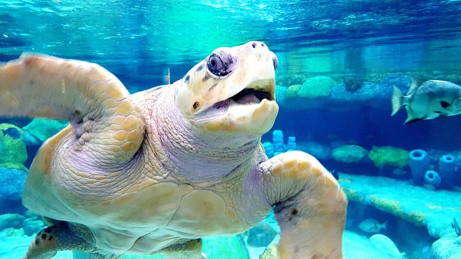 Underwater Animal Wildlife Animals In The Wild Water Nature Swimming Animal Themes Day Sea Turtle No People Close-up Mammal