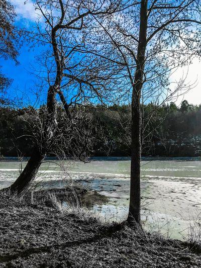 Lake Tree Sky
