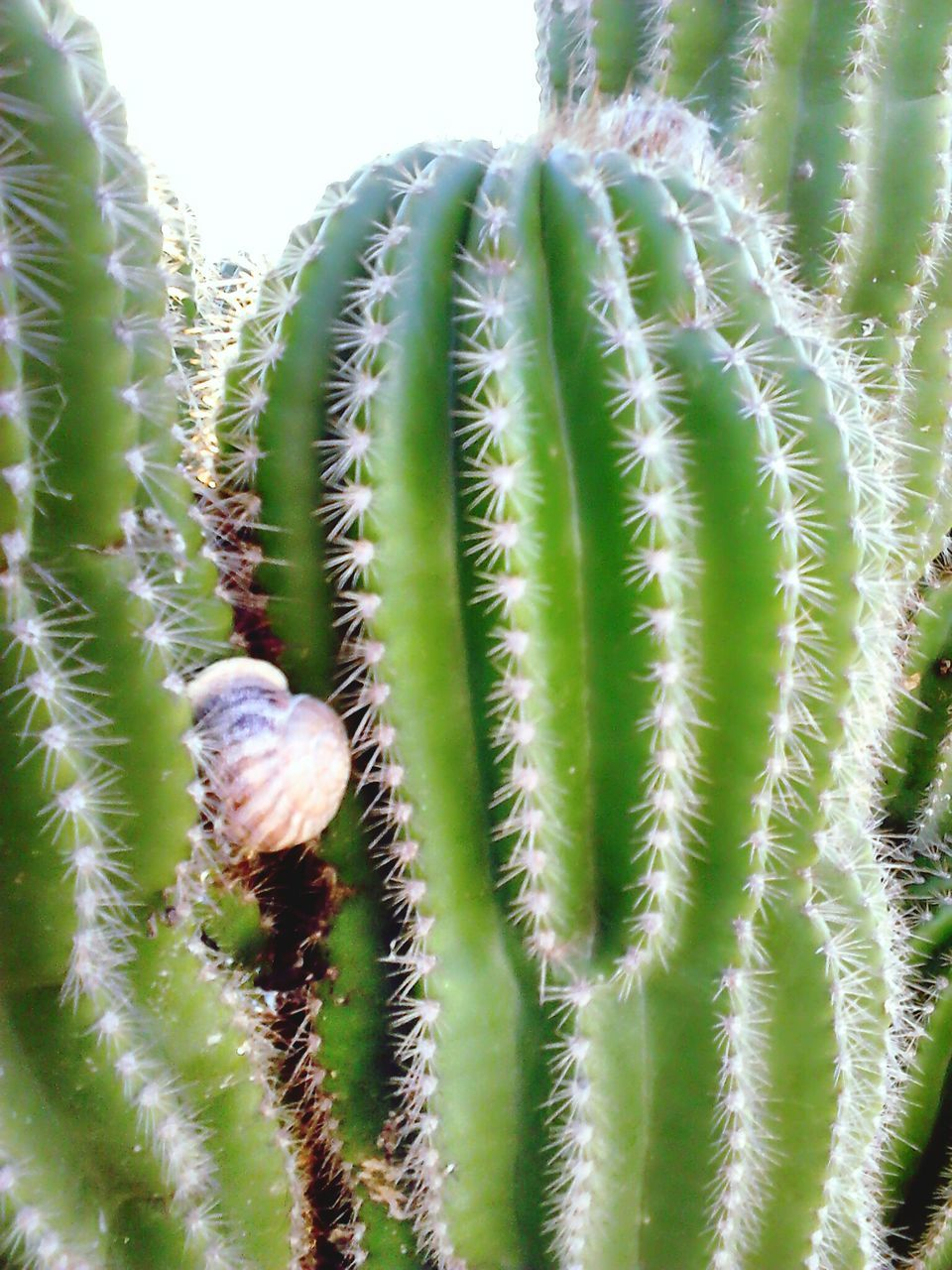 cactus, green color, growth, thorn, plant, nature, beauty in nature, spiked, no people, close-up, day, outdoors, freshness, flower, fragility