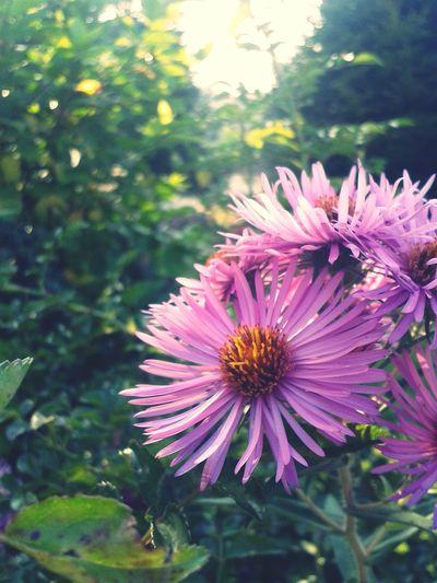 Flowers Nature <3 Purple Flower