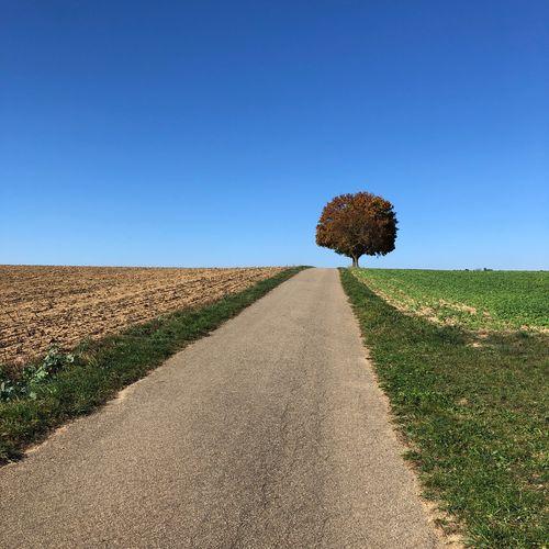 Rural Scenes Sky Field Landscape Agriculture