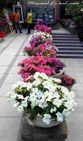 Flower Power Eyeem4photography - Strobist Enchanting Photography Flowerstagram Blooms.. Natures Beauty... Naturescape Flower Collection EyeEm Best Shots - Nature Nature_hippy Eyeemphotography Photojournal_of_a_travel_nomad