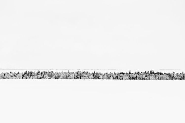 A long row of trees in a vast winter wonderland Landscape Blackandwhite Beautiful