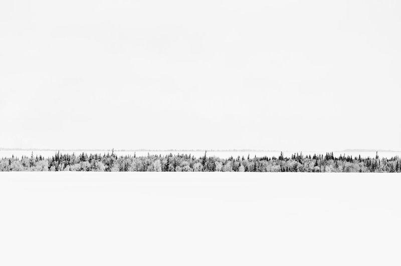 A long row of trees in a vast winter wonderland Landscape Blackandwhite Beautiful