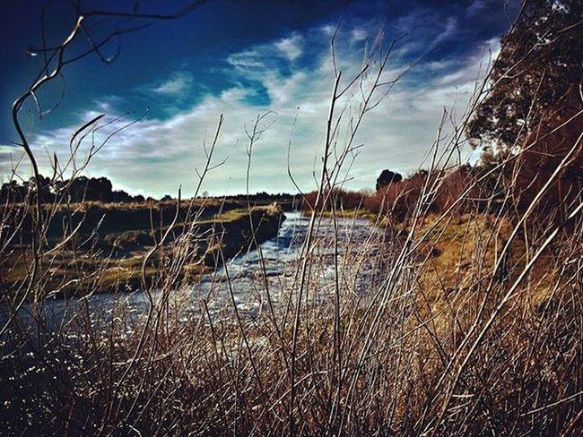 Invierno Pastizal Winter Grass Forage Forraje Yuyos Sky Skyporn Clouds Instanature Nature HDR Hdr_pics TresArroyos Naturelovers Nubes Domingo Sunday Weekend Naturaleza Arroyo Creek Flow  Peace peaceful vamopaloyuyo