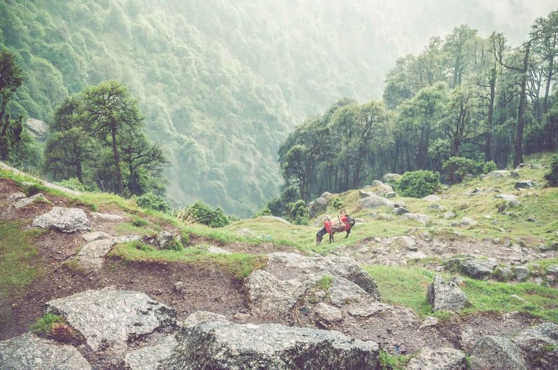On the way to Triund, Mcleod Ganj, and then it started to rain. Beauty In Nature Forest India Landscape Landscape #Nature #photography Mcleodganj Mountain Nature Nature Nature Photography Outdoors Rain Tourism Trekking #travelling #sightseeing