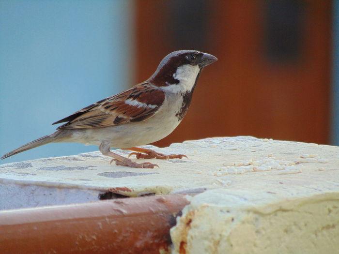 bird Bird Perching Water Animal Themes Close-up
