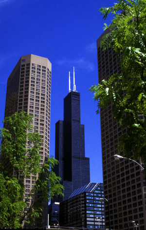 Willis Tower or Sears Tower, Chicago, Illinois Chicago Chicago Architecture Chicago, Illinois Chicago Downtown Chicago ♥ Chicago Illinois Chicago Skyline Willis Tower Willistower Sears Tower Searstower Color City Cityscape Presidential Towers Cityscapes Buildings Buildings & Sky Buildings Architecture Building Exterior Downtown Downtown Chicago Outdoors Skyline Skylines