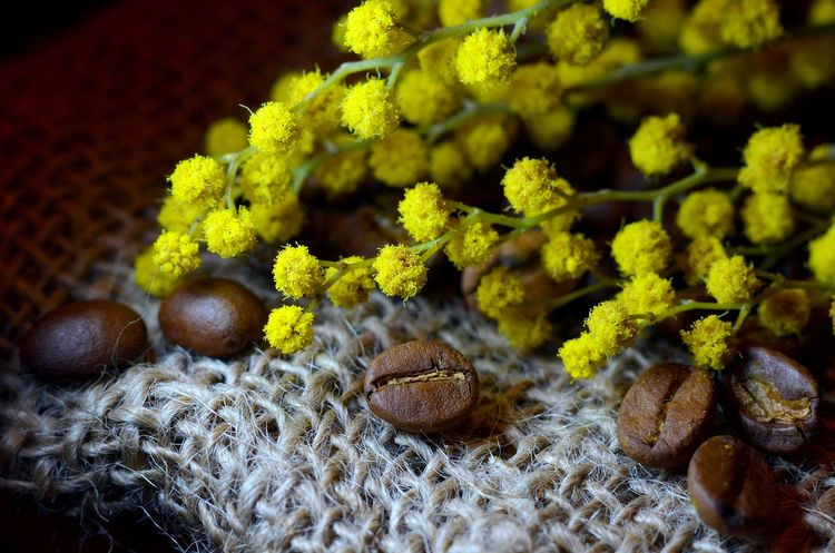 Close-up Coffee Flowers Mimosa Plant Still Life Yellow
