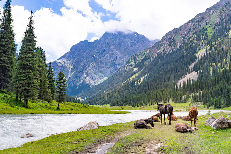 Mountain Beauty In Nature Scenics - Nature Mammal Animal Themes Animal Mountain Range Plant Livestock Domestic Animals Domestic Nature Tranquil Scene Land Pets Tree Sky Environment Landscape Tranquility No People Herbivorous Horses Kyrgyzstan