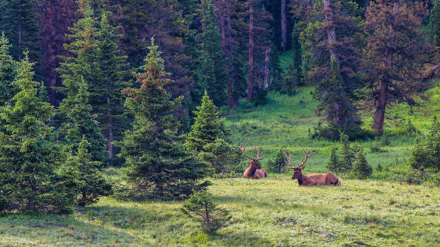 Beauty In Nature Elk Green Color Landscape Nature Outdoors Relaxation Rocky Mountain National Park Summer Tree The Great Outdoors - 2016 EyeEm Awards Fine Art Photography