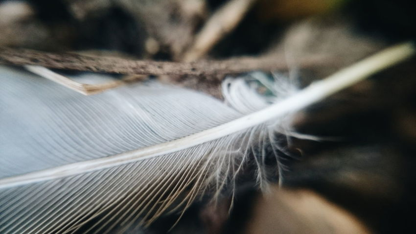 Close-up No People Fragility Day Indoors  Loom Manufacturing Equipment Macro Macro Nature Macro Photography Feather  Pattern Backgrounds