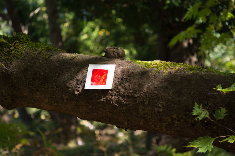 Follow the signs Tree Trunk Sign Outdoors Red Forest Adventure Direction Footpath Hiking Path Mountain Explore Hike Trekking Trek Pointer Orientation Signal Indication Pathway Woods Information Activity Navigation