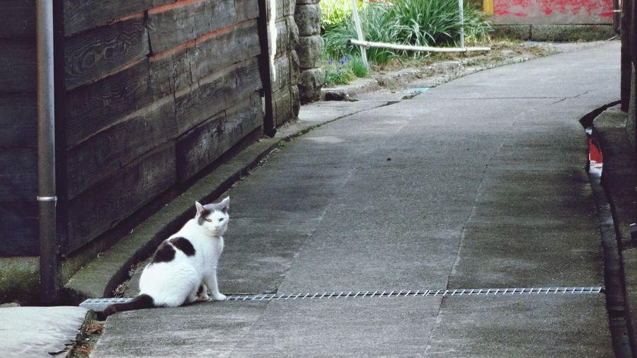 Cat Sakushima