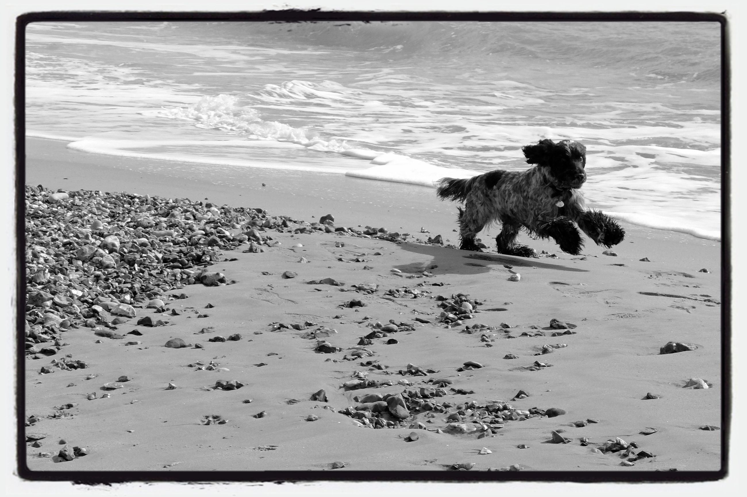 transfer print, sea, beach, water, auto post production filter, shore, sand, horizon over water, tranquility, dog, tranquil scene, animal themes, nature, scenics, one animal, wave, beauty in nature, relaxation, mammal, rock - object