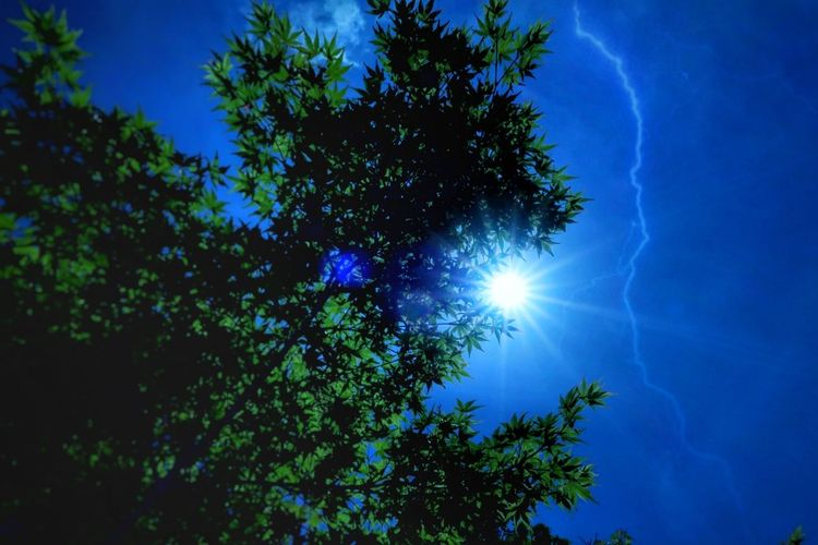 新緑 緑 太陽 光 もみじ 葉っぱ 二重露出 フレンド エフェクト 空 雲 いま空 青空 森 Blue Sky EyeEm Nature Lover Beauty In Nature Forest Tree Blue Sky Nature Astronomy EyeEm Best Shots 写真好き