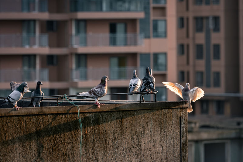 Birds Perching On Railing Against Building In City