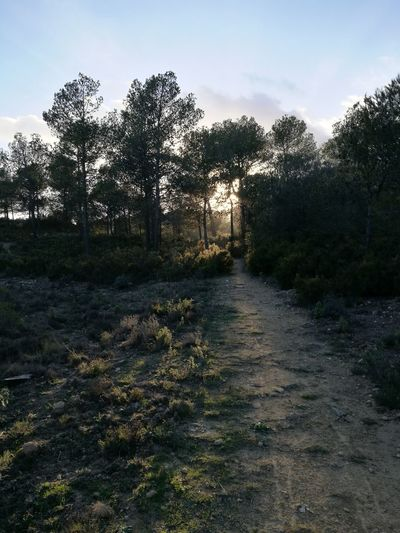 Los caminos me llevan a ti Tree Beauty In Nature Nature DaddysAngel Alcoy Winter Non-urban Scene Nature Tree Tranquility
