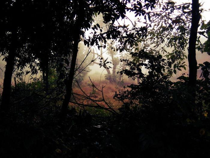Fog Nature Nature Photography Naturelovers Tree Water Window Sky Close-up First Eyeem Photo