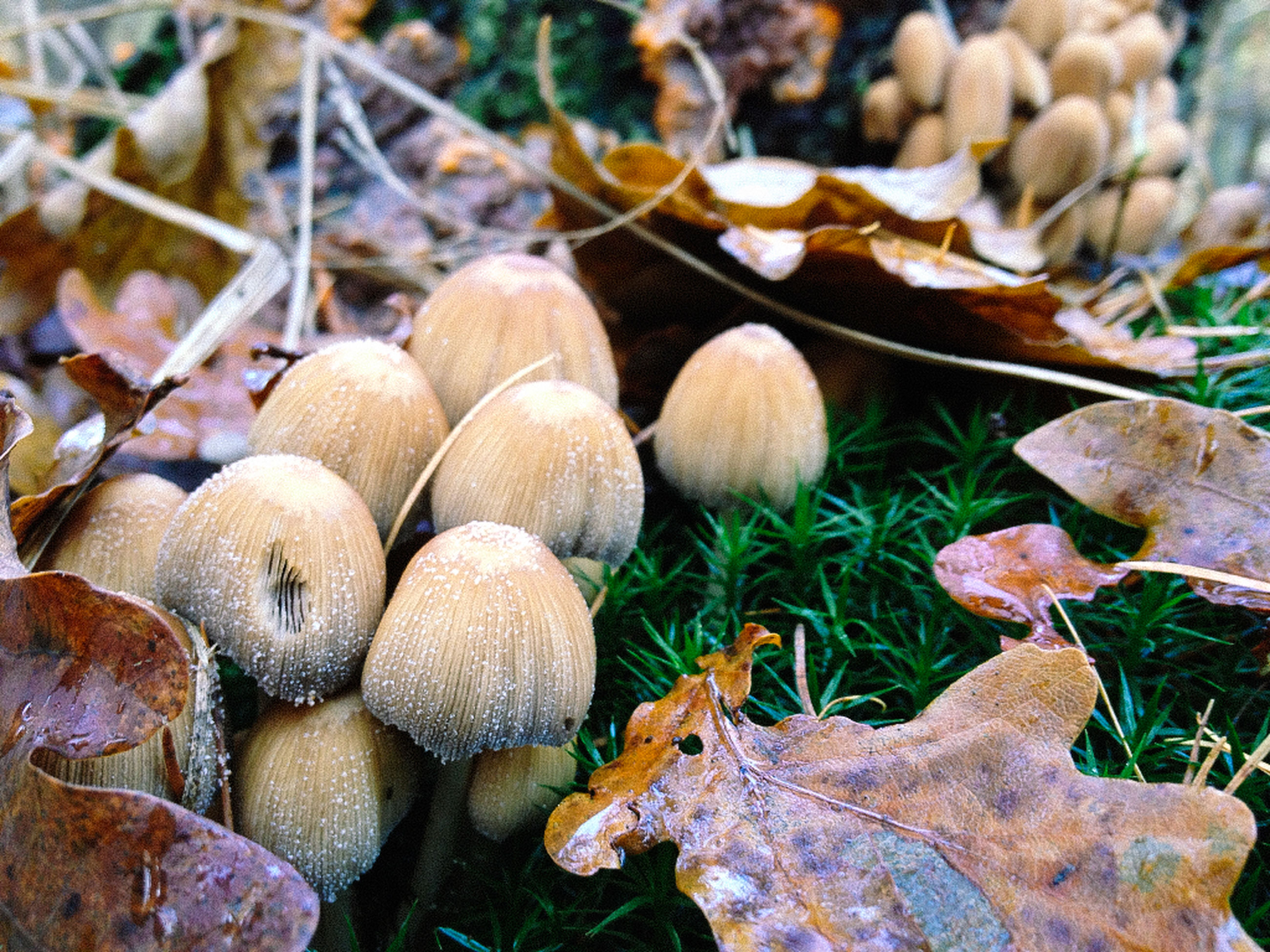 mushroom, fungus, growth, close-up, nature, field, brown, leaf, day, focus on foreground, outdoors, dry, wood - material, forest, log, toadstool, no people, beauty in nature, natural pattern, fragility