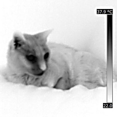 Animal Head  Animal Photography Animal Themes Animals Cat Cute Pets Domestic Animals Domestic Cat Immagine Termica Pet Pet Photography  Relaxing Temperatura Temperature Thermal Image Thermal Imaging Thermal Imaging Camera Thermic Image Diagnostic Method Veterinary Science