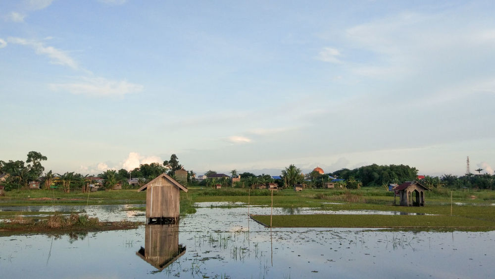 EyeEm Indonesia EyeEm Best Shots Agriculture Reflection Farmer Sky Outdoors Rural Scene Cloud - Sky Water Beauty In Nature Mammal Nature One Person Only Men Adult Day People Tree Field Tranquility Landscape Scenics Tranquil Scene No People Architecture Building Exterior Colour Your Horizn