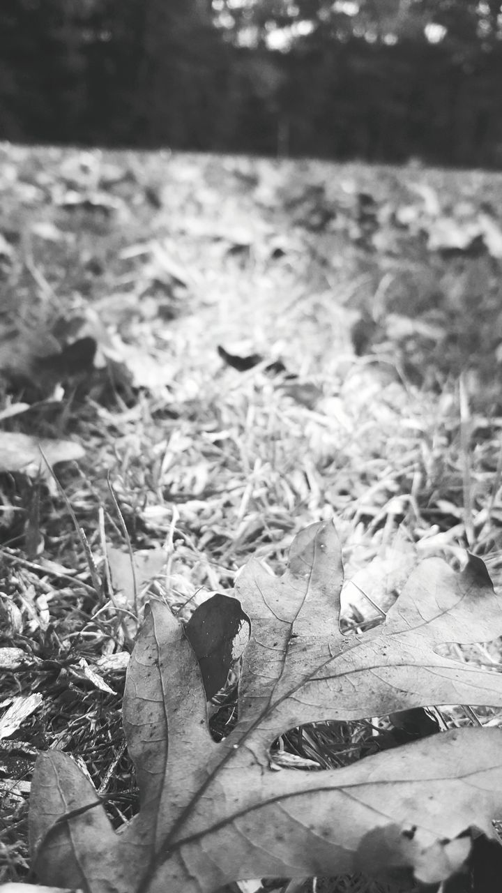 leaf, dry, nature, day, animal themes, outdoors, one animal, no people, autumn, change, close-up, animals in the wild, fragility, beauty in nature, maple