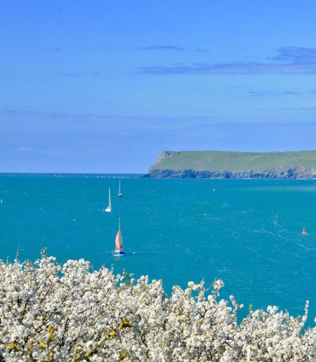 Boats coming in Blossom Foreground Cornwall Landscape Camel Estuary Cornwall Coast EyeEm Selects Sea Water Scenics - Nature Beauty In Nature Nature Land Tranquility Tranquil Scene Nautical Vessel Travel Horizon Sky Day Horizon Over Water Blue Holiday Sailboat