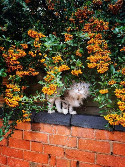 View of cat on wall