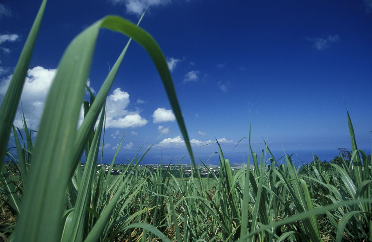 grass, growth, green color, sky, blue, nature, day, field, outdoors, beauty in nature, no people, scenics, plant, horizon over water, sea, water, close-up