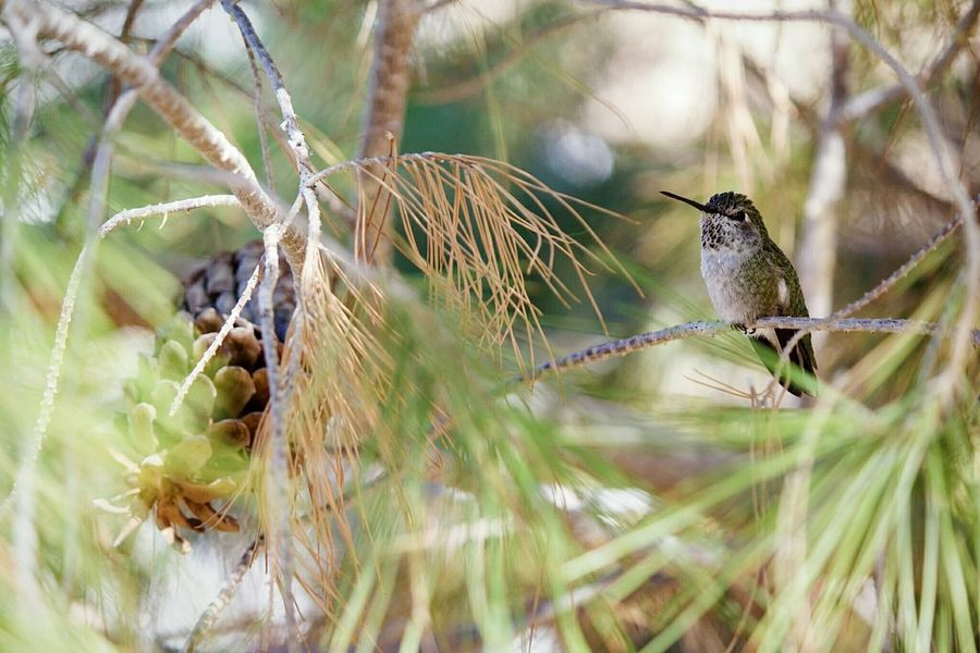 Animal Themes Animals In The Wild Bird One Animal Animal Wildlife Perching Focus On Foreground Nature Animal Outdoors Day Close-up No People Songbird  Branch Insect Beauty In Nature