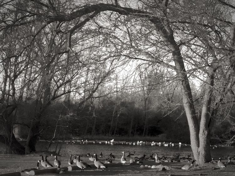 Tranquil Ypsilanti feathered population down by the old factory bridge. There Is Life Everywhere OpenEdit Iphonephotography No Double Exposure