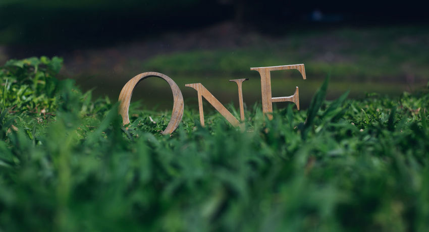 One Birthday Close-up Day First Eyeem Photo Grass Love One Person Plant Western Script