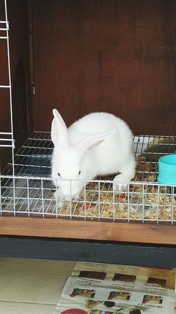 My Year My Viewmy sisters rabbit Brenda Animal Themes First Eyeem Photo One Animal Cage