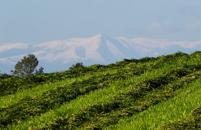 Agricultura Costabona Green Color Montagne Agriculture Countryside Field Landscape Mountain Mountain Range Muntanya