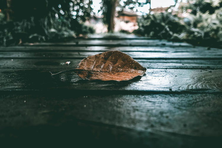 leafs Leafs 🍃 Beauty In Nature Flower Collection Grass And Trees Flower Flowers, Nature And Beauty Dark Photography Animal Animal Themes One Animal Animal Wildlife Wet Water Animals In The Wild Day Close-up Nature Rain No People Reflection Outdoors Rainy Season