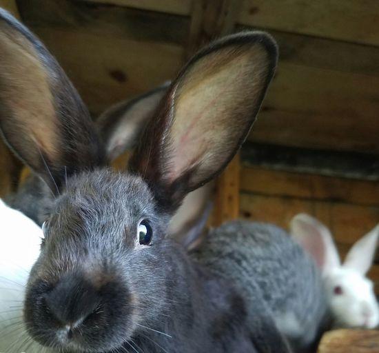 Bunnies Bunny
