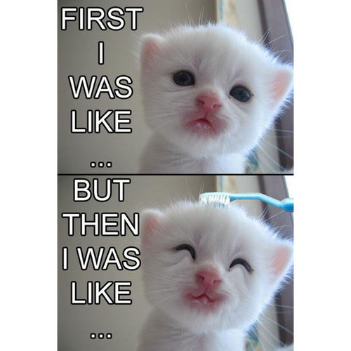 Kitty!  First Picture :) Cuteeee♥♡♥ Animal_collection
